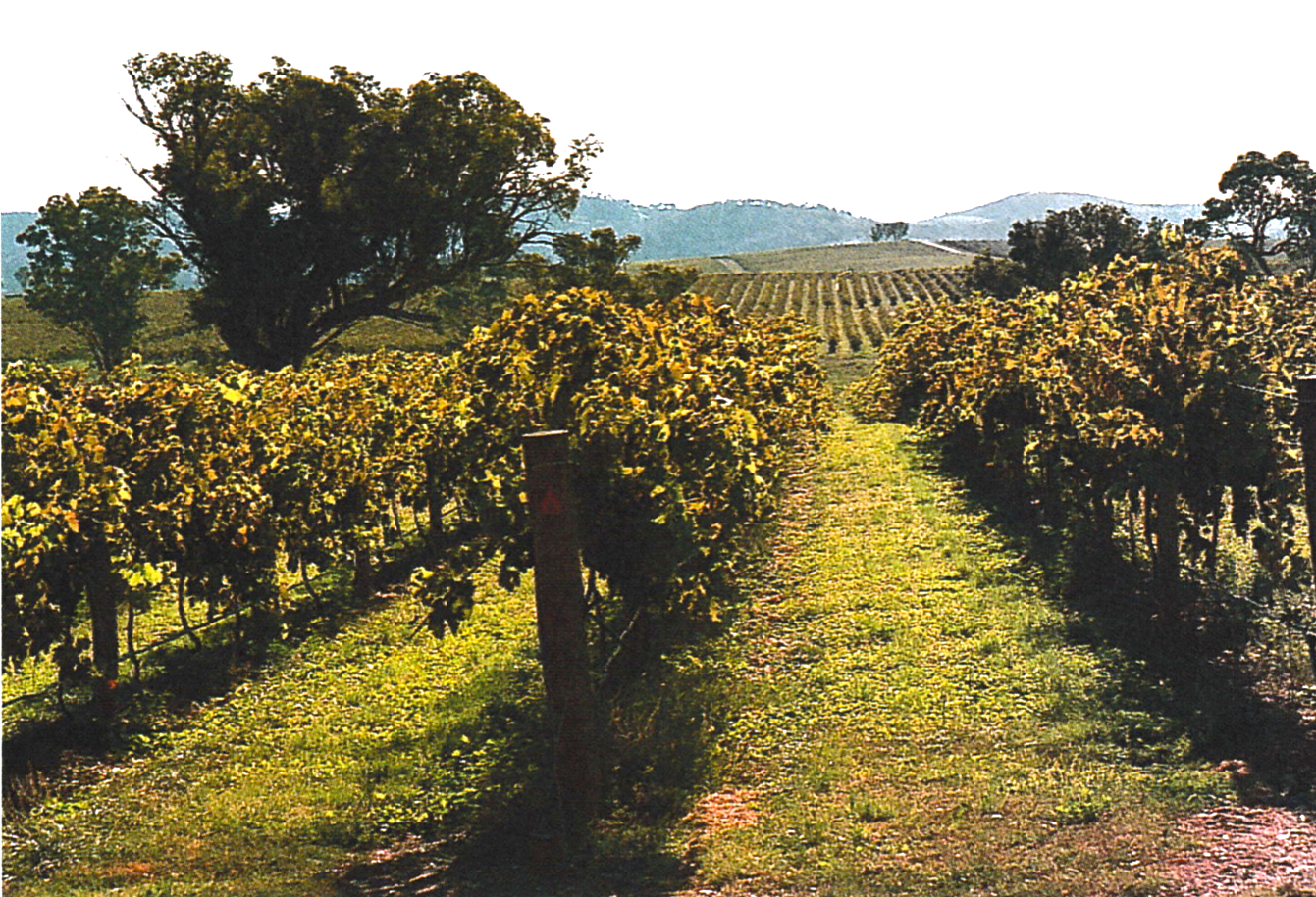 visit mudgee vineyards